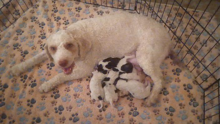 "Aida ed i cuccioli ""pasqualini"""