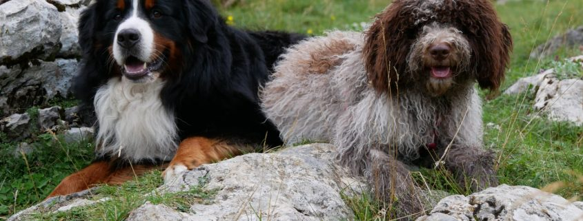Keko & Koda