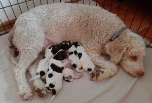 Aida e cuccioli