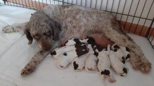 Margot e cuccioli
